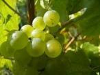Bourgogne - Vers une surprise en blanc ?