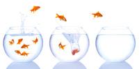 Pilotage de la performance des systèmes d'information : la création de valeur