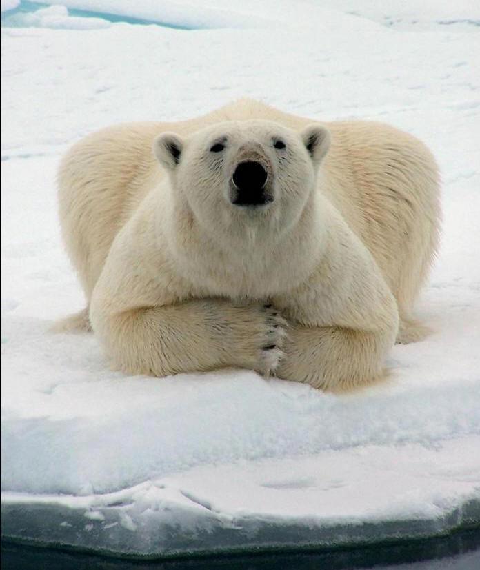 Ce que nous pouvons attendre de Copenhague COP15