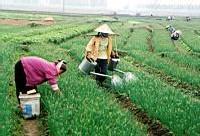 VIETNAM | Vers le recouvrement en toute légalité