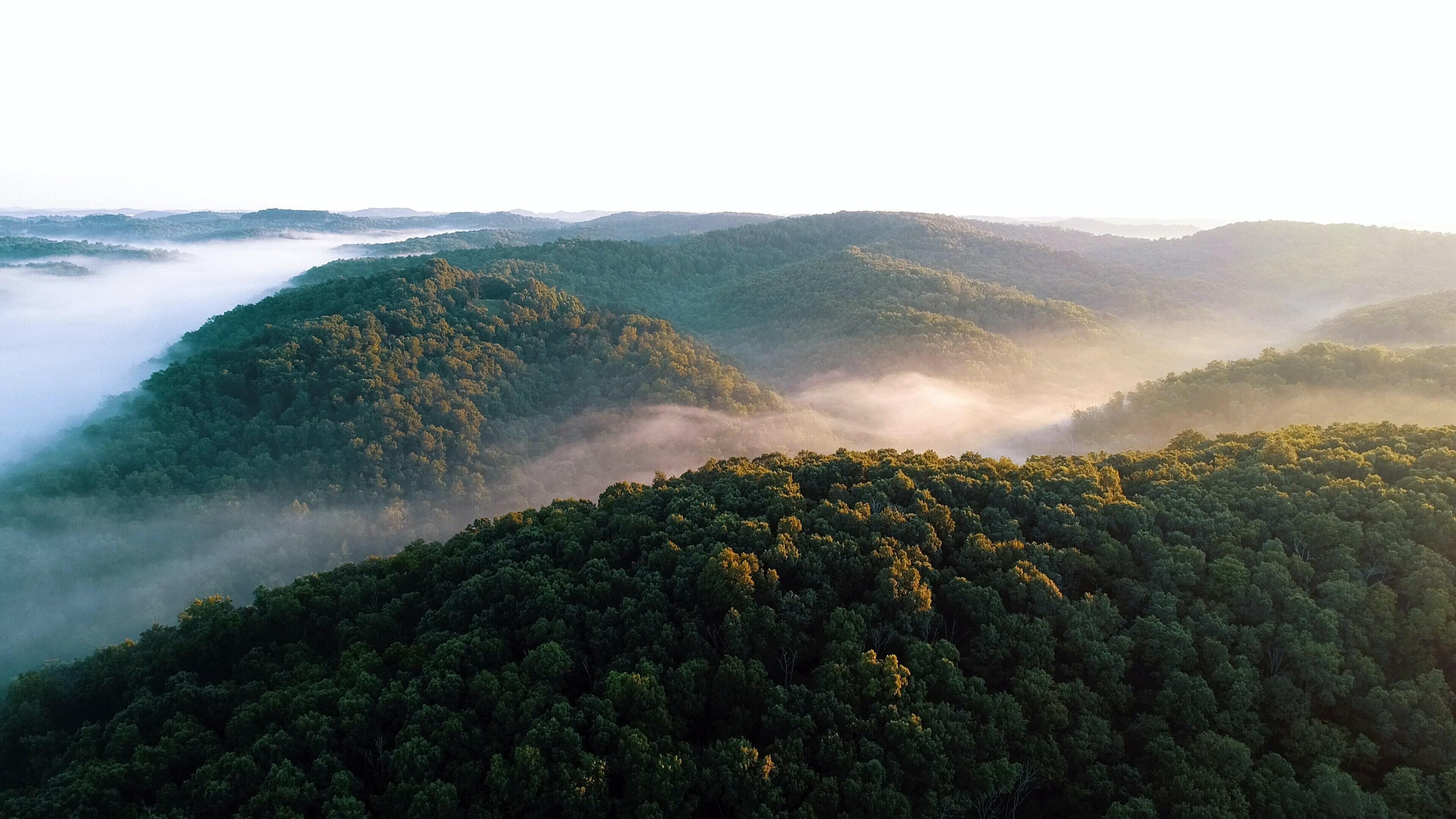 carbonABLE : sanctuariser la nature grâce à la blockchain